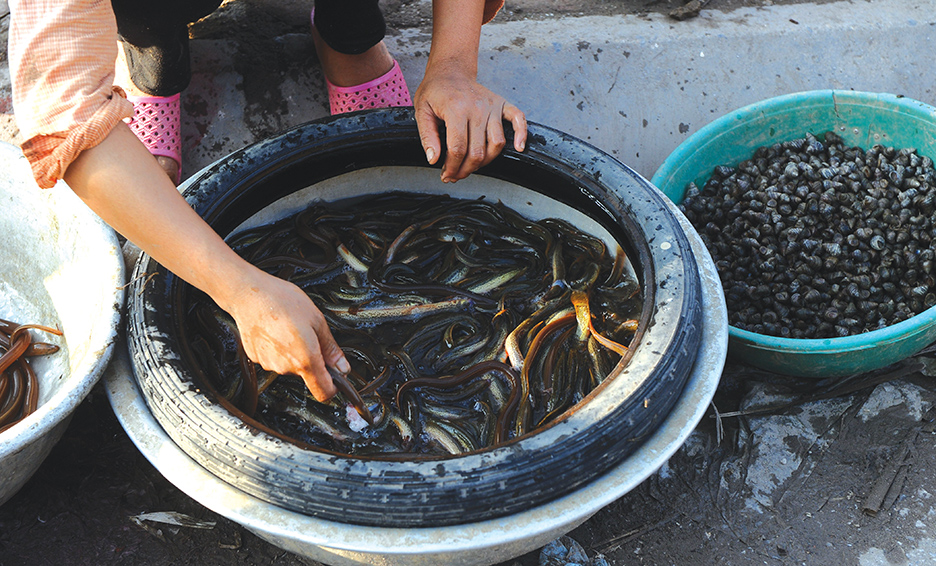 Japan: Eel Protection