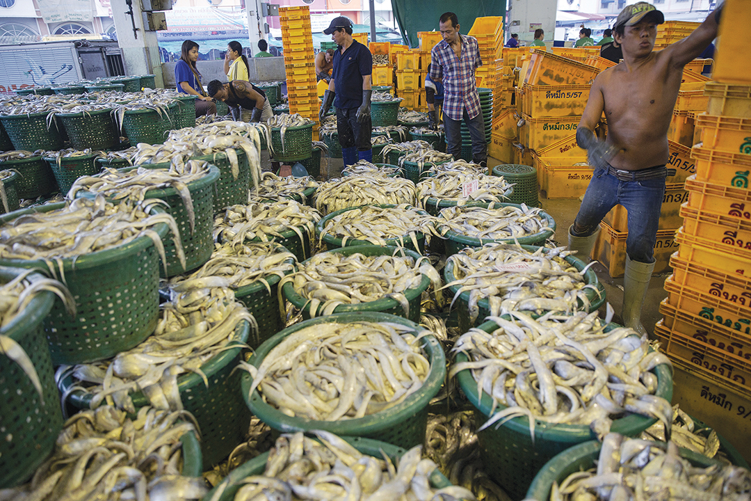 Workers sort fish at a wholesale market in Mahachai, Thailand, in April 2015. Thai agriculture officials pledged to crack down on illegal fishing. Reuters