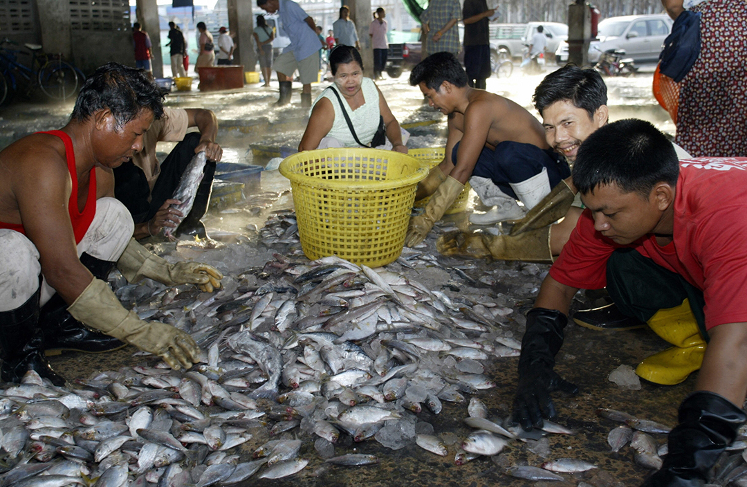 Trafficking still rampant in Thai fishing industry, report says