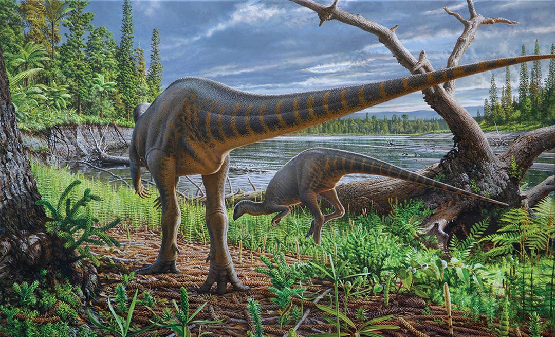 Partial Fossil of Turkey-Size Dinosaur Found in Australia
