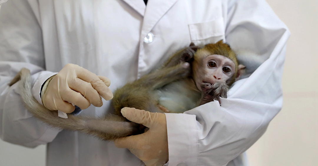 Monkey-human hybrid research renews concerns over PRC ethics