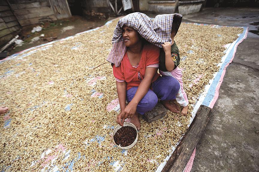 Indonesia: Suaka Kopi