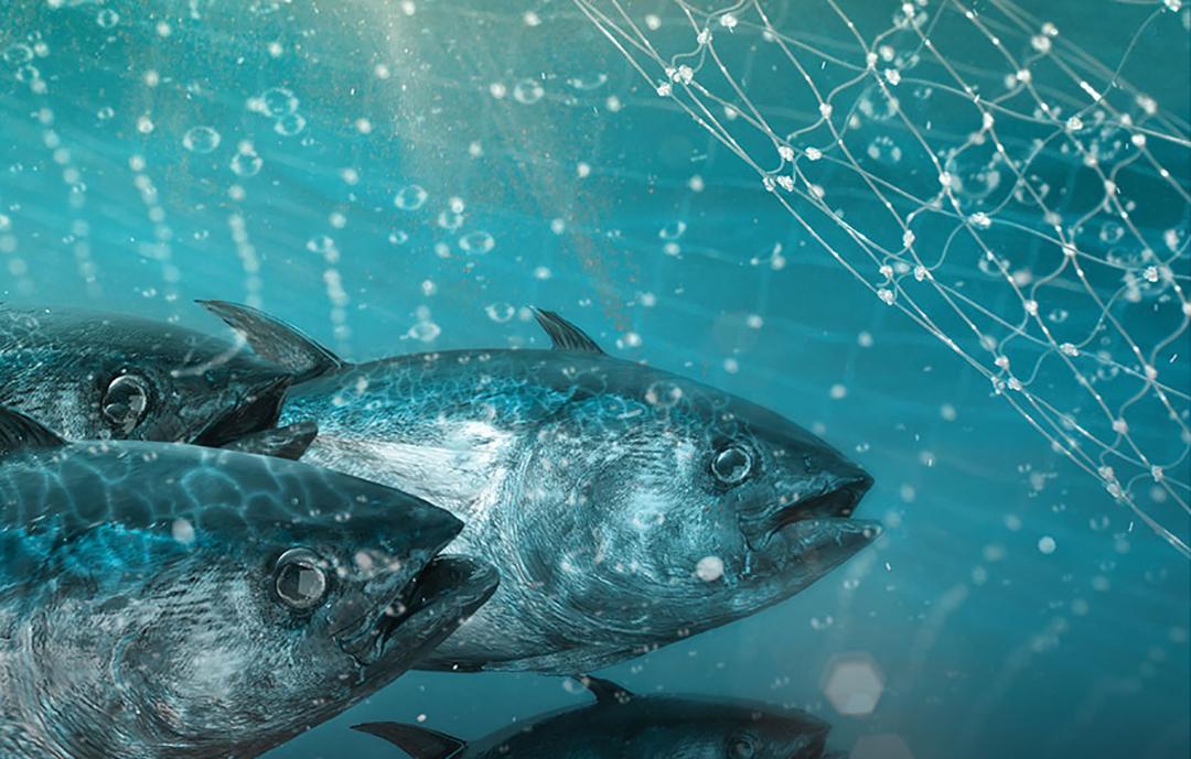 Fisheries Partnerships
