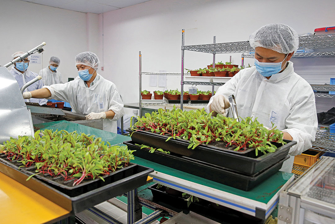 Singapore's Food Revolution