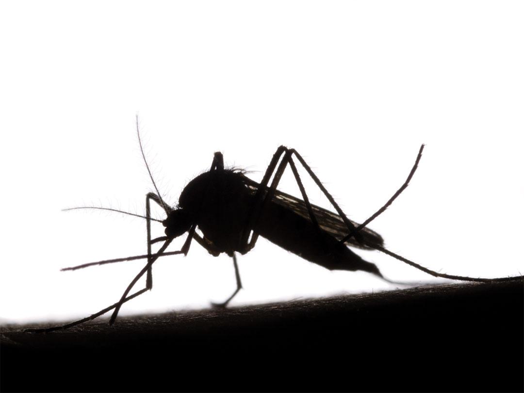 美国航天局率先  针对缅甸推出疟疾预测技术