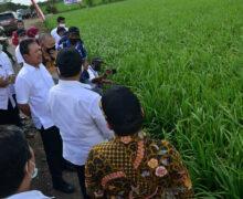 Lumbung pangan nasional menjadi hal terpenting dari rencana keamanan Indonesia