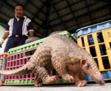 Southeast Asia: Pandemic changes wildlife trade perspective