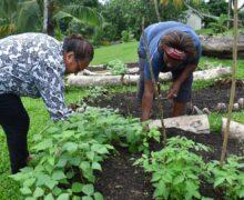 パンデミックの中、食糧不足の解決に挑む太平洋島嶼国