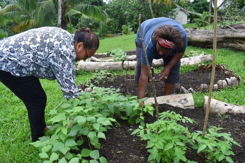 태평양 섬국가, 코로나19 기간 중 식량 부족 해소 노력