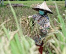 อินโดนีเซีย: การเสริมสร้าง ความมั่นคงด้านอาหาร